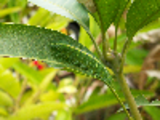 Thumbnail Baron Caterpillar - Animal Camouflage