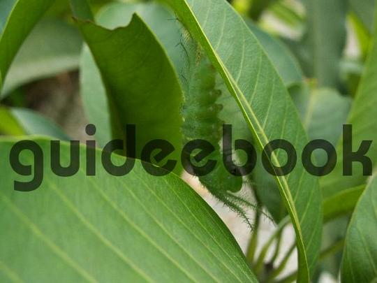 Product picture Camouflage - Baron Caterpillar